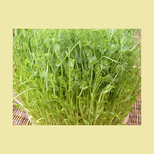 pea-seeds-speckled-sproutman