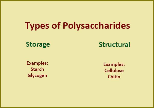 polysaccharides-types
