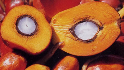 red-palm-fruit-kernel