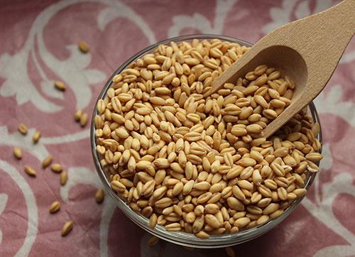 rejuvelac-recipes-wheat-berries