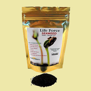 seaweed-fertilizer-wheatgrass-kits