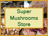 super-mushrooms-store-logo
