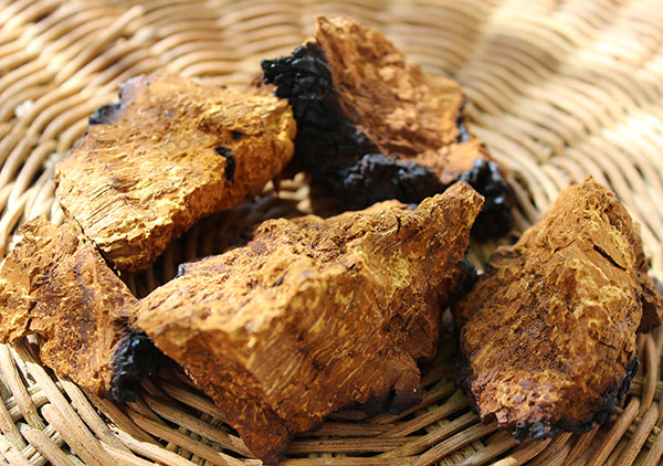 superfoods-list-chaga-pieces