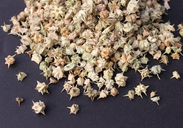 ayurvedic-herbs-tribulus
