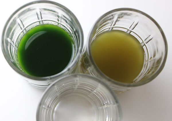 types-of-marine-phytoplankton