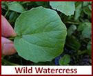 watercress-page-update