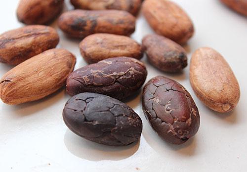 what-is-cacao-arriba-nacional