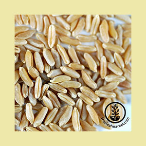wheat-kamut-seed-wheatgrass-kits
