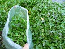 wild-food-foraging-1