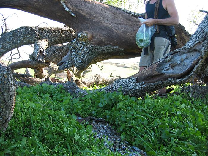 wild-food-foraging