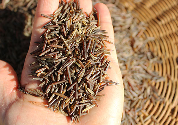 wild-rice-grains